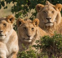 South Africa - Kruger National Park Safari Tour
