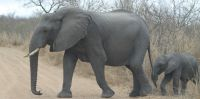 day3-elephant-game-park-south-africa